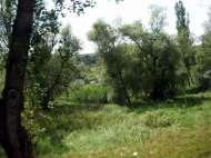 Basarabia 13