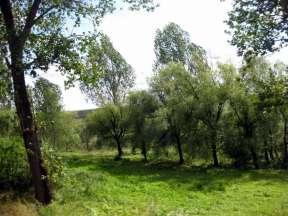 Basarabia 14